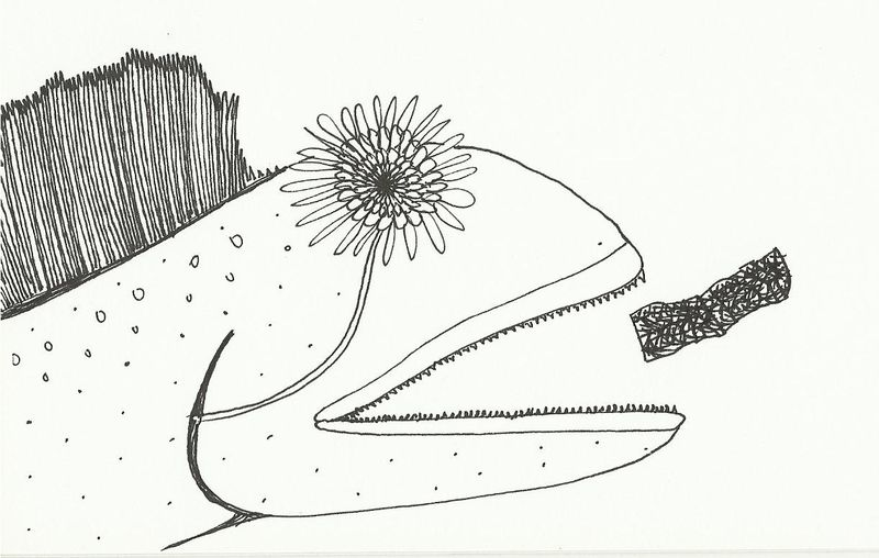 Flowereyefish